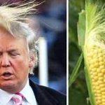 Frizura lui Trump